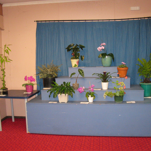 Pot plants on display
