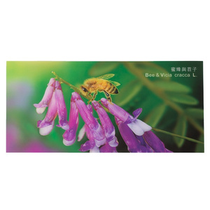 3D Bee Picture - Vicia Cracca